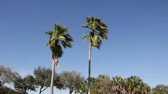 Palm Trees In The Wind - stock footage