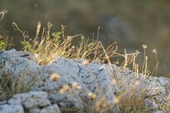 Barren rock - stock photo