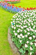 Flowerbed with tulips at an outdoor park - stock photo