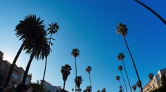 Driving Under Beverly Hills Palm Trees Stock Footage
