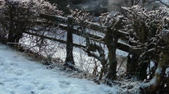 Thawing snow on fence hedgerow rural scene Stock Footage