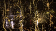 View of the city's river through the tree branches at night in autumn. Stock Footage