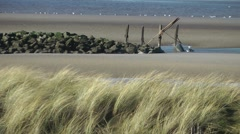 Sandy beach waving grasses foreground sea background Stock Footage