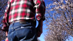 Almond Orchard, walking in the orchard Stock Footage