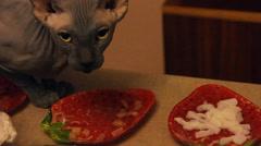 Bald cat eats meat Stock Footage