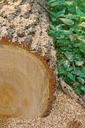 Log, sawdust, forest Stock Photos