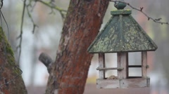 Bird tits flying around bird feeder Stock Footage