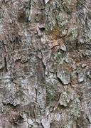 Tileable Bark Tree Texture Stock Photos