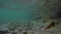4k underwater footage of stones and pebbles in ocean while wave hits Stock Footage
