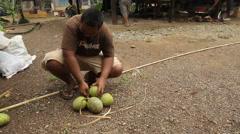 Breadfruit bundle on Micronesian Island of Pohnpei Stock Footage