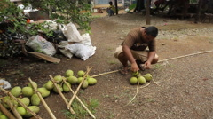 Preparing Breadfruit bundles Stock Footage