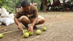 Man Binding Breadfruit on the Micronesian island of Pohnpei - stock footage