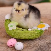Little chicken in the nest.  Easter - stock photo