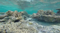 Exotic marine life near Maldives island, tropical summer vacation concept Stock Footage