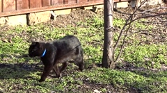 Black cat in a garden Stock Footage