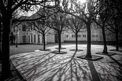 tree shadows in morning Dresden - stock photo