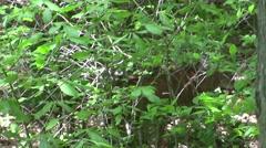 2 deer run off - stock footage