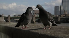 Pigeons in front of the Shard London CU (B-Roll/Cutaway/GV) | HD 1080 Stock Footage