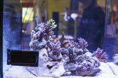 Marine aquarium Stock Photos