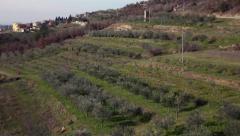 Olive trees field in Croatia Stock Footage