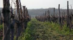Wineyards in winter Stock Footage
