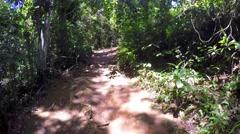 Walking into a Forest in Ilha Grande, Rio de Janeiro, Brazil Stock Footage