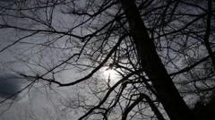 Dark stormy forest detail shot Stock Footage