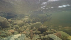 4K underwater footage of stones in a stream with strong current Stock Footage