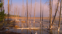 View of mudpot area in Yellowstone National Park Stock Footage