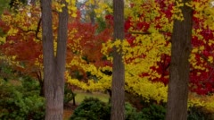 View of Red and yellow leaves in Japanese garden Stock Footage