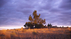 View of trees at dusk, Oregon Stock Footage