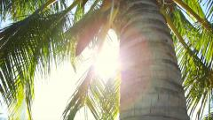 coconut tree in the sun - stock footage