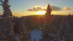 AERIAL: Flying over winter forest at sunrise Stock Footage