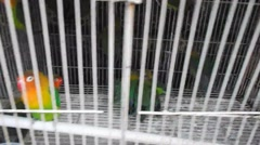 The caged bird, the loss of freedom Stock Footage