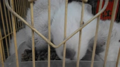 The small white rabbit eating at rest Stock Footage