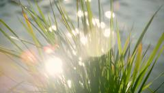 Closeup of grass in the wind with waiving water and sparkles. Stock Footage