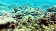 Fishes in corals. Underwater world. Stock Footage