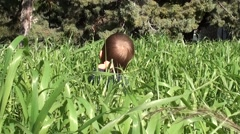 Baby sits in high grass zoom in Stock Footage