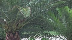 4K Palm Tree on a Rainy Day in Lefkada Island, Greece, Summer Storm on a Beach Stock Footage