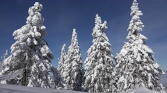4K Alpine View in Winter, Mountain Scene in Snow by Day Conifer Forest Landscape Stock Footage
