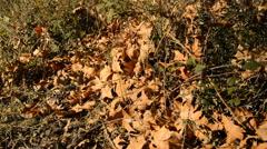 Fallen Leaves in Autmn Stock Footage