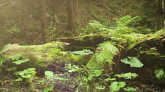 Camera slide near old Tree Stump with Fern leaves Stock Footage