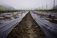 Farming in Japan - stock photo