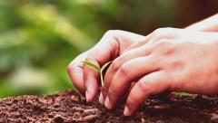 Male hand planting young tree over sunrise light Vintage Style - stock footage