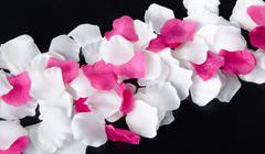 Composition with white and pink petals - stock photo
