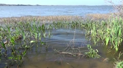 Waves In The Reeds And Grass The Water Of Lake Dora Stock Footage