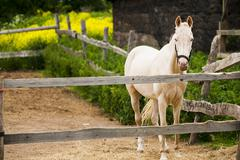 Horse in the paddock - stock photo