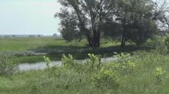 summer, shrike on a branch - stock footage