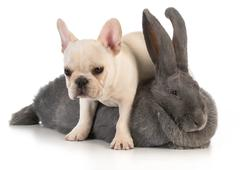 bunny and puppy - stock photo