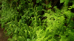 View of plants in Silver Falls State Park Stock Footage